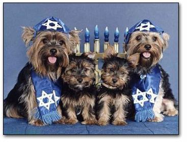 http://www.culvercitydogpark.org/images/chanukah2.jpg